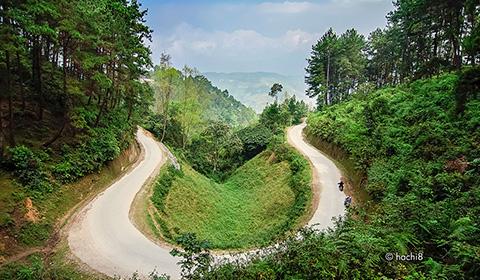 Lao Va Chai pine forest