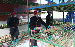 Nam Dam Traditional Medicine Cooperative