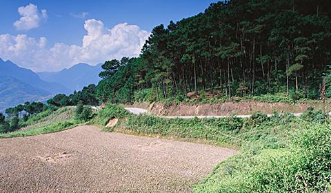 Phượt xe máy xuyên rừng thông