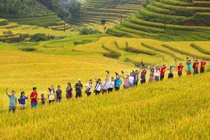 http://discoverhagiang.com/wp-content/uploads/2020/09/Du-lịch-Hà-Giang-mùa-lúa-chín-300x200.jpg