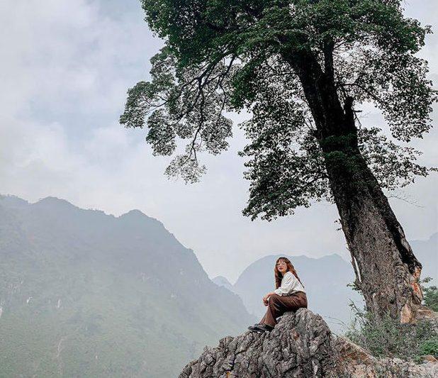 Cây cô đơn Hà Giang nhưng không cô đơn như tên gọi